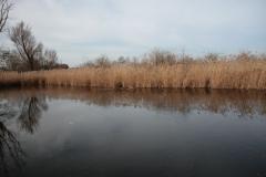 2020-02-16 Sochowa Zagroda - nad stawem (8)