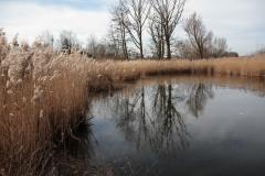 2020-02-16 Sochowa Zagroda - nad stawem (9)