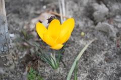 2020-03-10 Sochowa Zagroda (6)