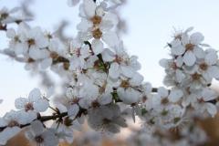 2020-04-12 Sochowa Zagroda - wielkanoc (12)