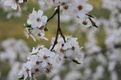 2020-04-12 Sochowa Zagroda - wielkanoc (13)