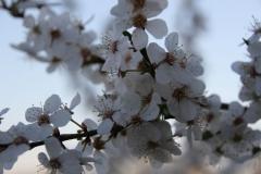 2020-04-12 Sochowa Zagroda - wielkanoc (14)