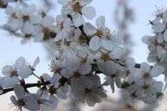 2020-04-12 Sochowa Zagroda - wielkanoc (15)