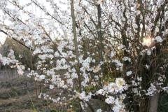 2020-04-12 Sochowa Zagroda - wielkanoc (18)