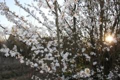 2020-04-12 Sochowa Zagroda - wielkanoc (19)
