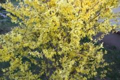2020-04-12 Sochowa Zagroda - wielkanoc (4)