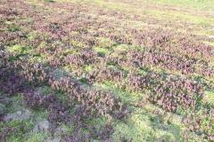 2020-04-12 Sochowa Zagroda - wielkanoc (46)