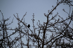 2020-04-12 Sochowa Zagroda - wiosna (2)