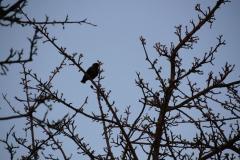 2020-04-12 Sochowa Zagroda - wiosna (4)