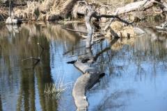 2020-04-19 Sochowa Zagroda - wiosna (14)