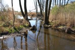 2020-04-19 Sochowa Zagroda - wiosna (2)