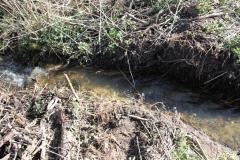 2020-04-19 Sochowa Zagroda - wiosna (5)