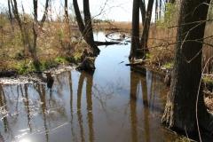 2020-04-19 Sochowa Zagroda - wiosna (7)