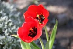 2020-04-23 Sochowa Zagroda - wiosna (11)