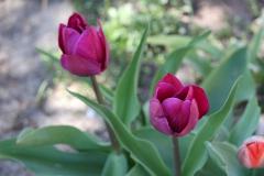 2020-04-23 Sochowa Zagroda - wiosna (16)