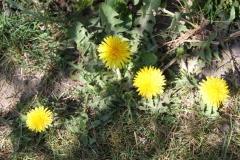 2020-04-23 Sochowa Zagroda - wiosna (22)
