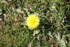 2020-04-23 Sochowa Zagroda - wiosna (25)