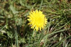 2020-04-23 Sochowa Zagroda - wiosna (27)
