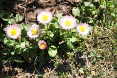 2020-04-23 Sochowa Zagroda - wiosna (28)
