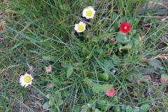 2020-04-23 Sochowa Zagroda - wiosna (30)