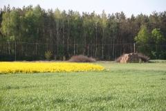 2020-05-08 Feliksów (16)