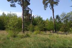 2020-05-10 Sierzchowy (5)