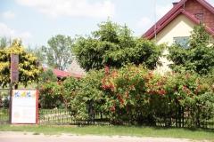 2020-06-13 Sochowa Zagroda (4)