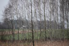 2021-01-06 Sochowa Zagroda (6)