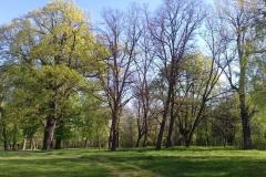 2018-04-22 Nowe Miasto - pałac (20)