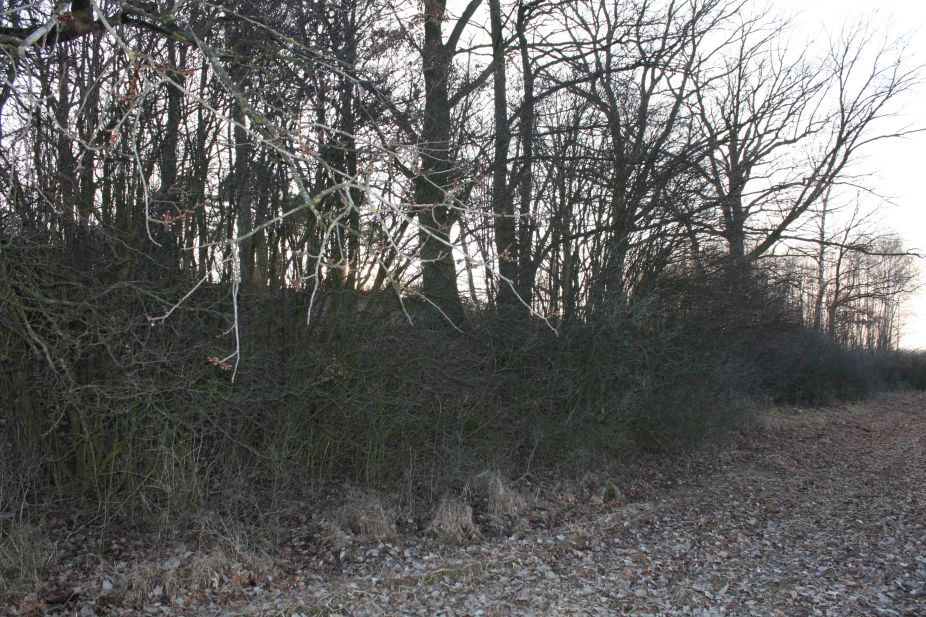 2019-02-18 Prusy - cm. z I wojny światowej (77)