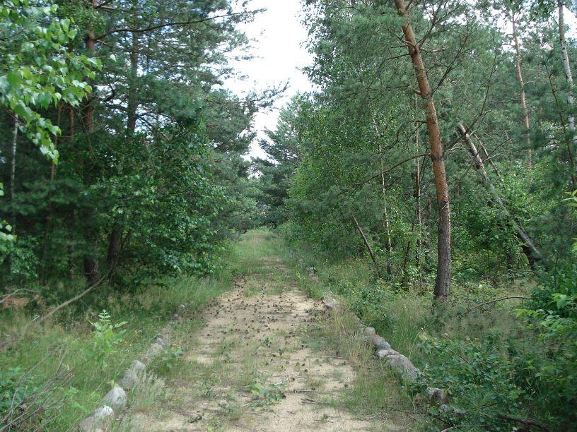 2007-06-24 Roszkowa Wola - cm. z I wojny światowej (14)