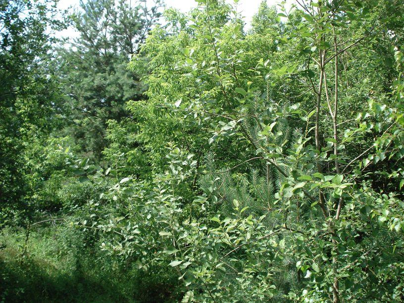 2007-06-24 Roszkowa Wola - cm. z I wojny światowej (5)