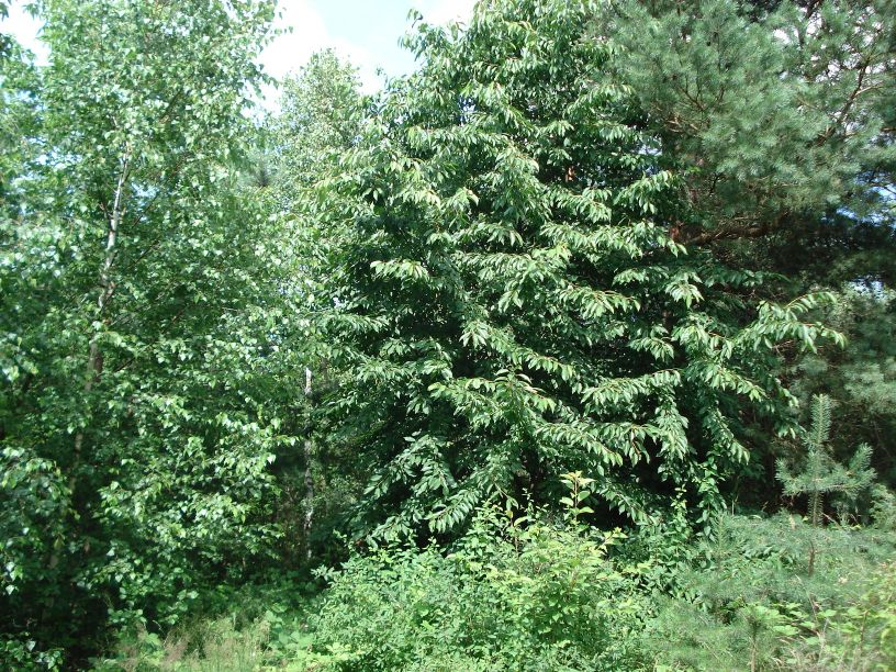 2007-06-24 Roszkowa Wola - cm. z I wojny światowej (6)