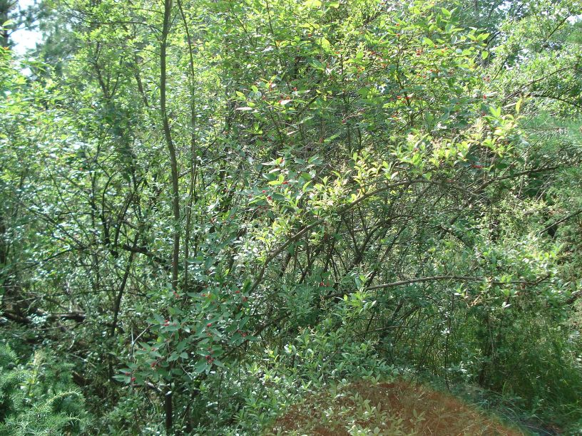 2007-06-24 Roszkowa Wola - cm. z I wojny światowej (8)