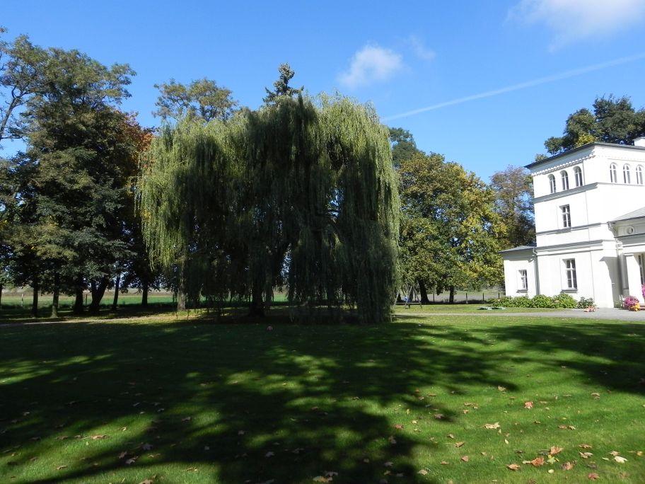 2011-10-02 Rylsk - pałac (7)