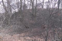 2012-03-18 Stara Rawa - grodzisko (1)