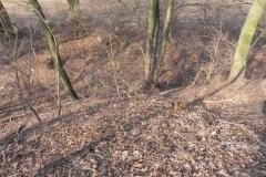 2012-03-18 Stara Rawa - grodzisko (17)