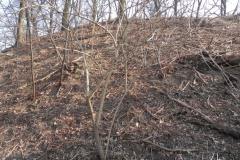 2012-03-18 Stara Rawa - grodzisko (22)