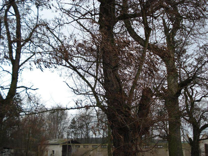 2007-01-14 Wilkowice - pałac (13)