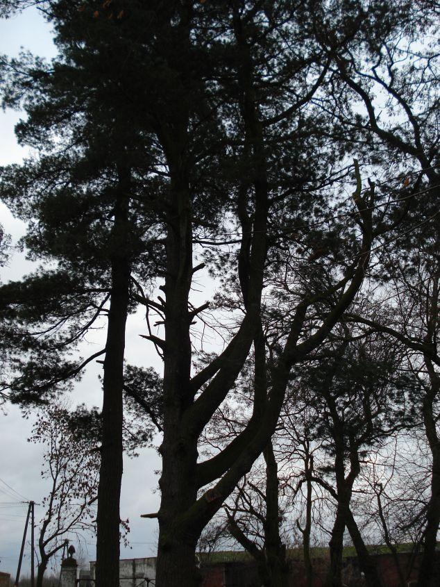 2007-01-14 Wilkowice - pałac (5)
