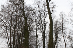 2018-12-23 Kuczyzna kapliczka nr1 (4)