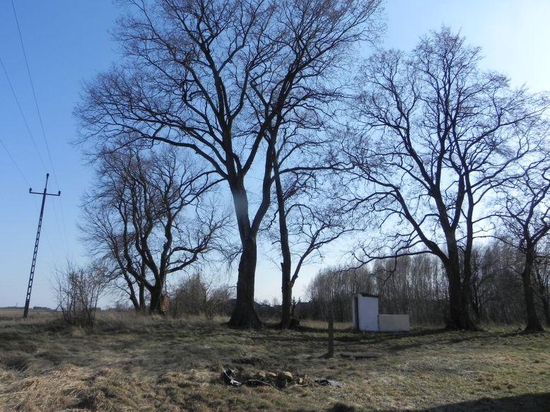 2018-04-08 Brzozówka - mur i piwnice (1)