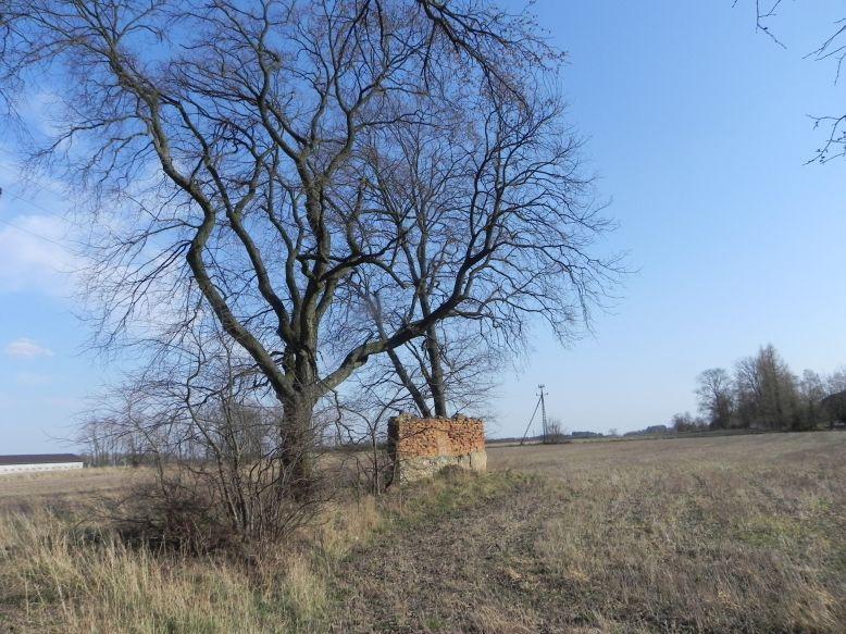 2018-04-08 Brzozówka - mur i piwnice (2)