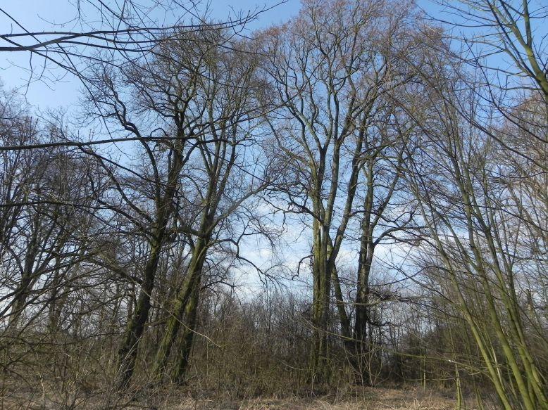 2018-04-08 Brzozówka - mur i piwnice (42)