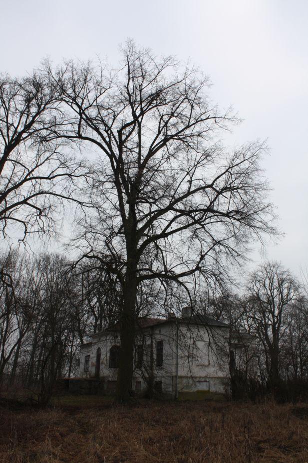 2019-02-15 Bujały - pałac (22)
