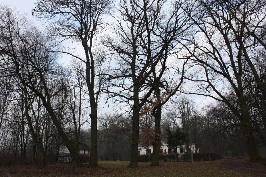 2019-02-15 Bujały - pałac (50)