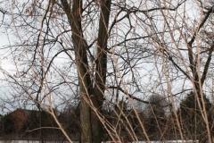2019-01-29 Roszkowa Wola kapliczka nr3 (3)