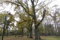 2011-10-30 Czerniewice - park (29)