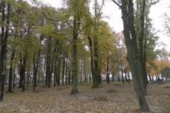 2011-10-30 Czerniewice - park (30)