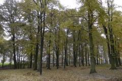2011-10-30 Czerniewice - park (31)